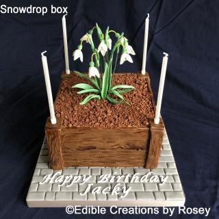 Snowdrop Box Cake