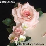 Chandos Rose