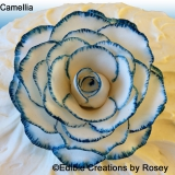 Blue and white Camellia
