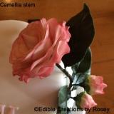 Camellia Stem