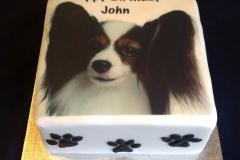 Papillon dog cake